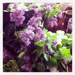 The smell of lilacs is possibly one of my favourite things- I go 'hunting' every year, and this year I have help.